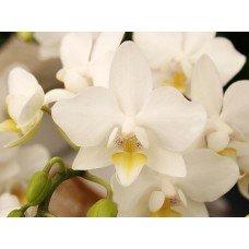 Фотообои - Цветок