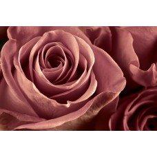 Фотообои - Лепестки роз